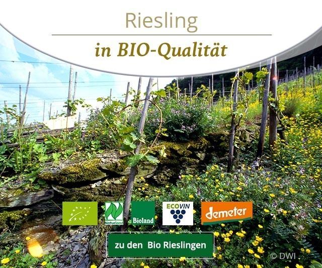 Riesling in Bio-Qualität