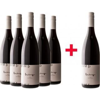 5+1 Lemberger Gutswein Paket - Weingut Knauß