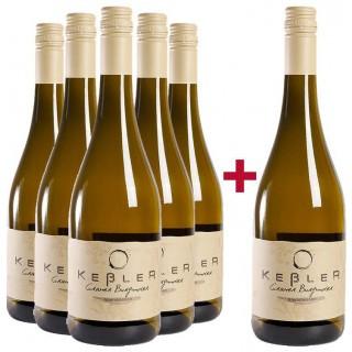 5+1 Paket Grauer Burgunder trocken BIO - Weingut Keßler