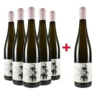 """5+1 Paket Grauburgunder """"Réserve"""" trocken BIO - Weingut Bietighöfer"""