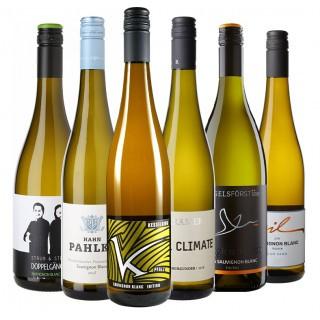2018 Sauvignon Blanc Favoriten Paket