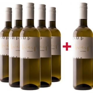 5+1 Weiß trocken BIO Paket - Weingut Knauß
