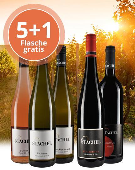 Kraftvolle & markante Weine aus der Südpfalz