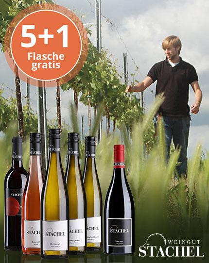 Markante und kraftvolle Weine aus der Süd-Pfalz
