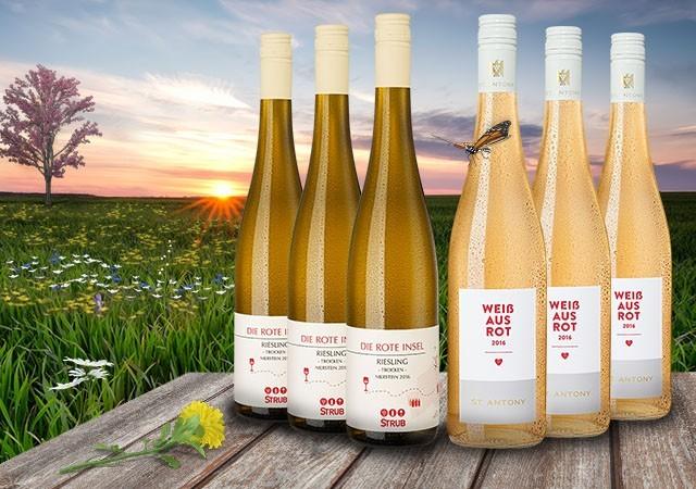 Frühlings Weinpakete