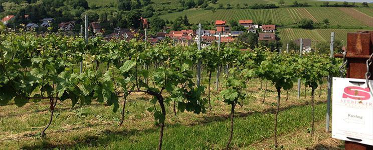 Weingut Stübinger