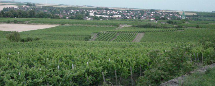 Weingut Schwahn-Fehlinger