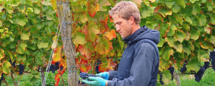 Ökologisches Weingut Hubert Lay