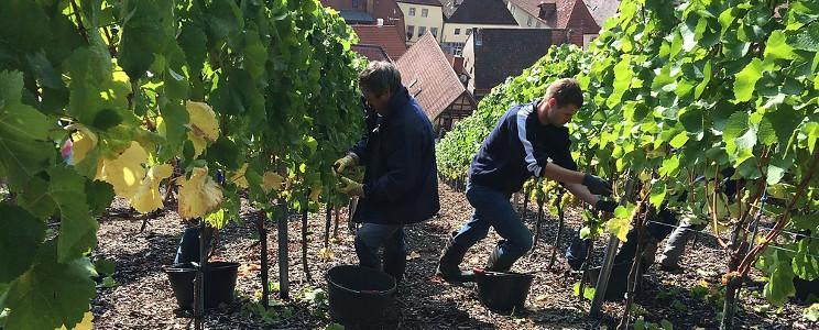 Weingut Zur Schwane