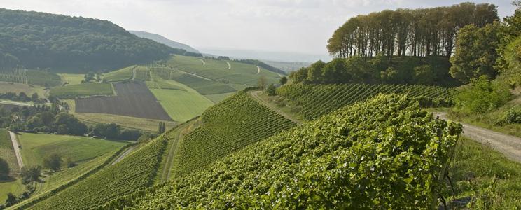 Weingut Castell: & mehr