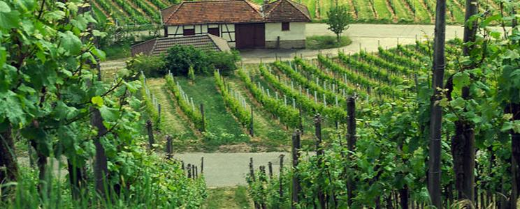 Weingut Graf Adelmann