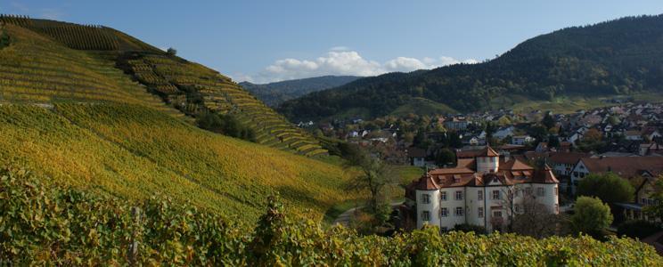 Schloß Neuweier Weingut