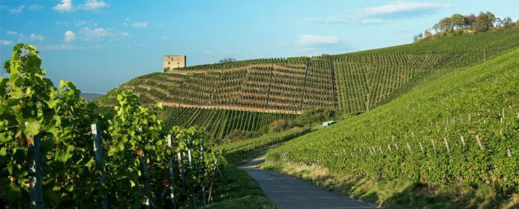 Weingut Herzog von Württemberg