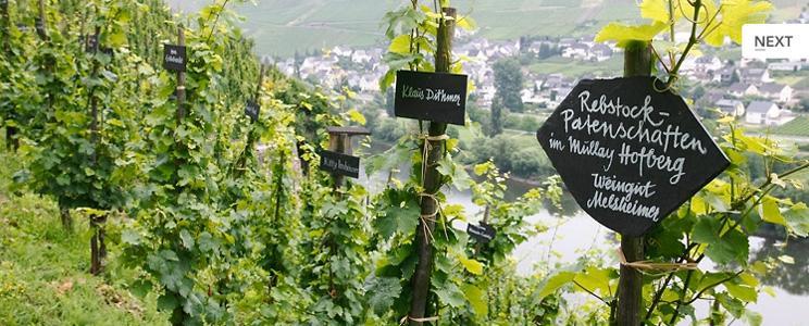Weingut Melsheimer