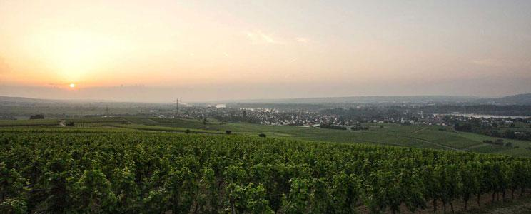 Weingut Allendorf