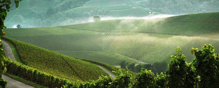 Weingut Von der Mark Walter