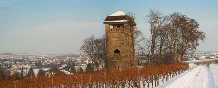 Winzer der Rheinhessischen Schweiz eG