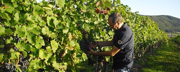 Weingut Arno Kruft