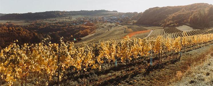 Weingut Biewers