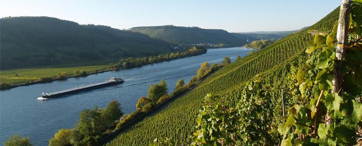 Weingut Lorenz: Riesling