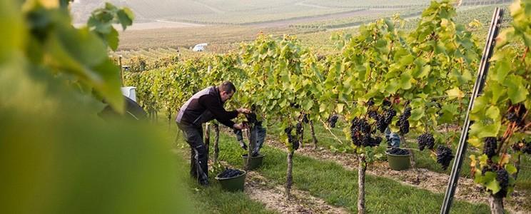 Weingut Breitenbach
