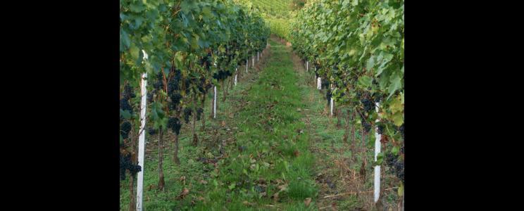 Weingut-Destillerie Harald Sailler  (Seite: 2)