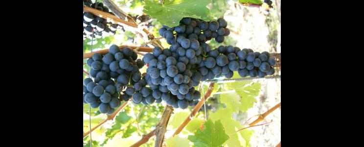 Weingut-Destillerie Harald Sailler: Auslese