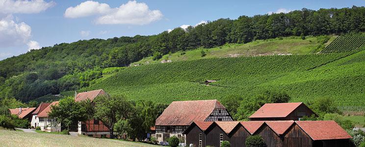 Weingut Steinbachhof : Weißwein