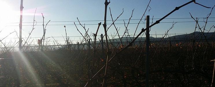 Weinbau Gross
