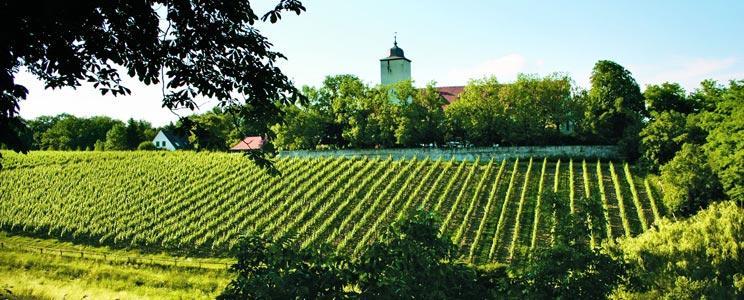 Weingut Graf von Schönborn - Weingut Schloss Hallburg