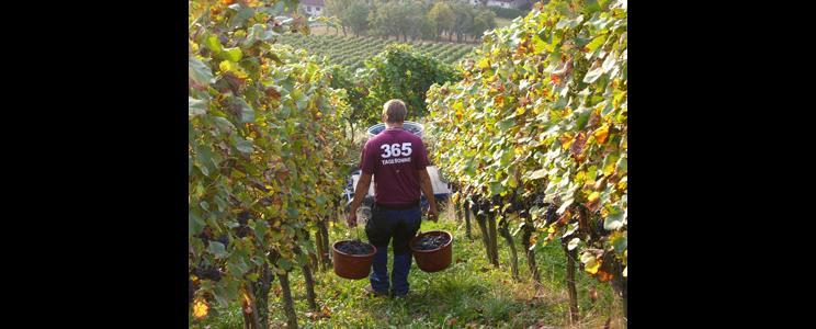 Weingut Zimmermann