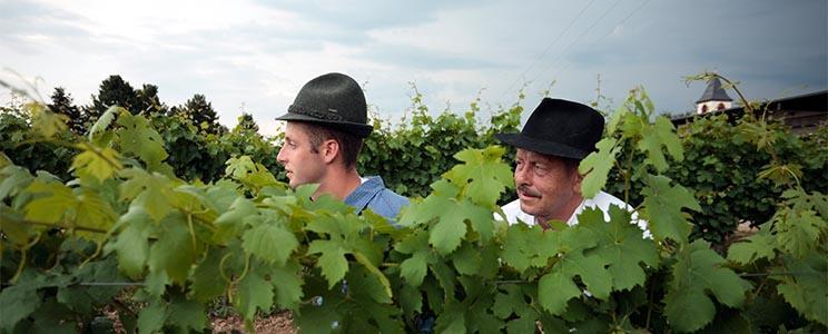 Weingut Hinterbichler