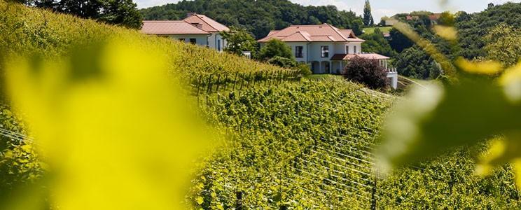 Hirschmugl - Domaene am Seggauberg: Chardonnay