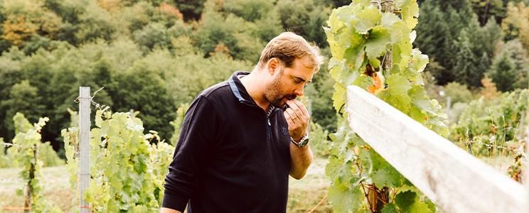 Weingut von Hövel  (Seite: 2)