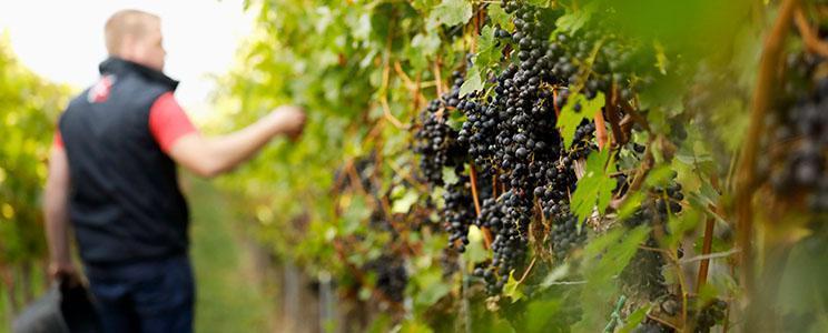 Weingut Kesselring