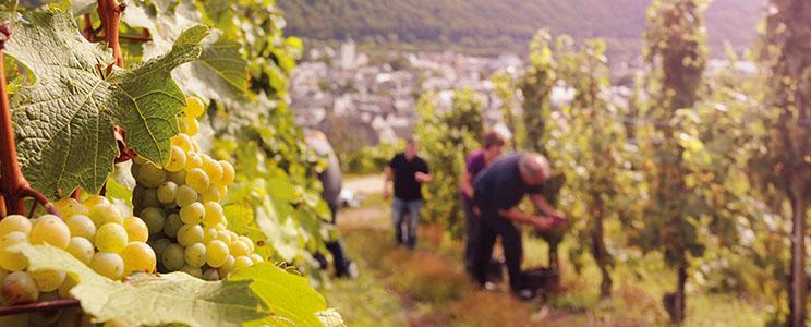 Weinhaus Markus Kiebel