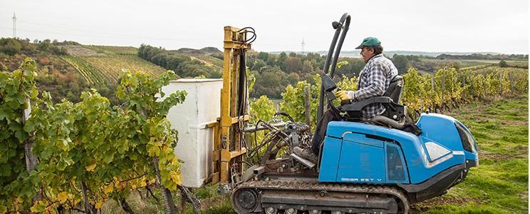 Weingut Kruger-Rumpf: Sekt