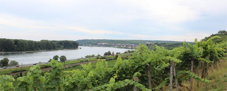 Weingut Rappenhof