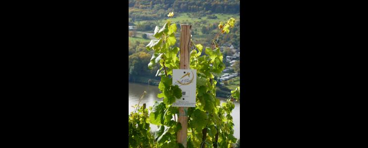 Weingut S.A. Prüm