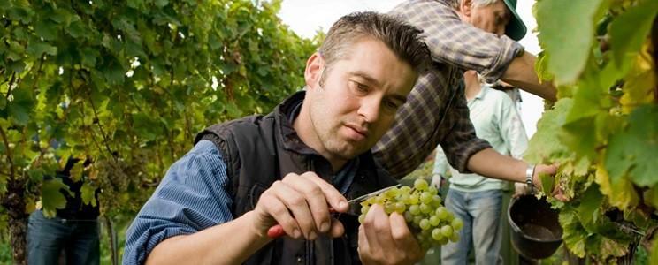 Weingut Philipp Kuhn: Weißwein