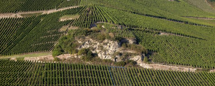 Weingut Lothar Kettern