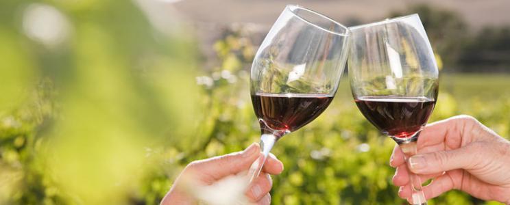 Wein Zimmer