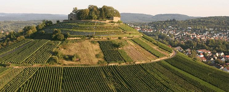 Weingut Seyffer: Riesling