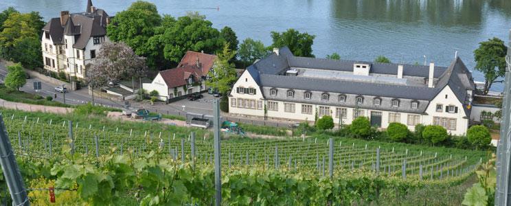 Weingut Louis Guntrum