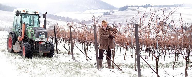 Weingut Ökonomierat Johannes Kleinmann