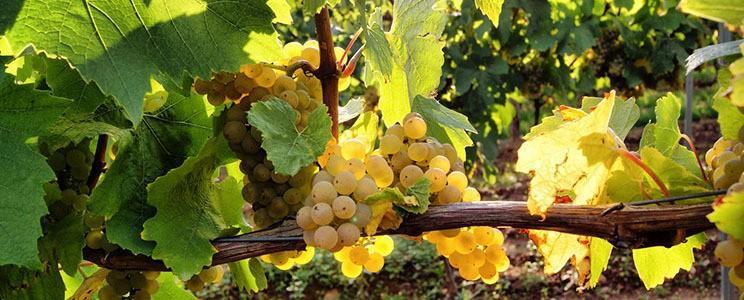 Weingut Sonnenhof Langenlonsheim