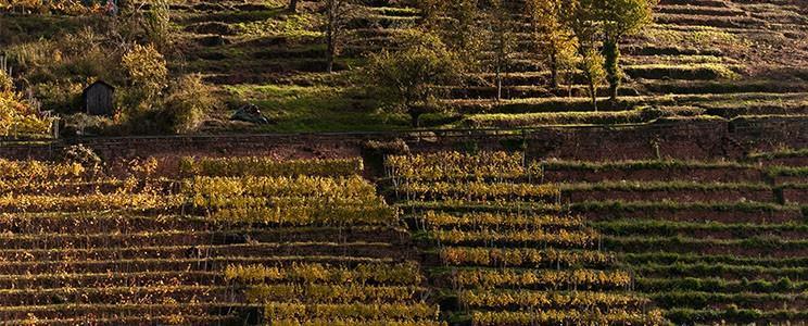 Weingut Steintal
