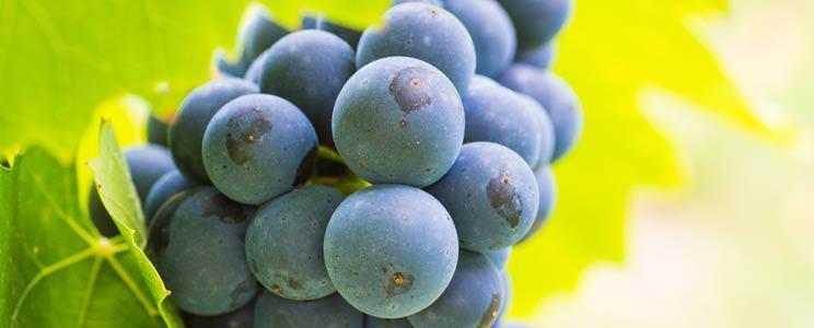 Weingut Gaufer: Gebrauchtes Barrique