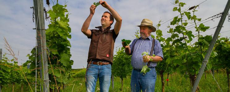 Oekologisches Weingut Schmidt
