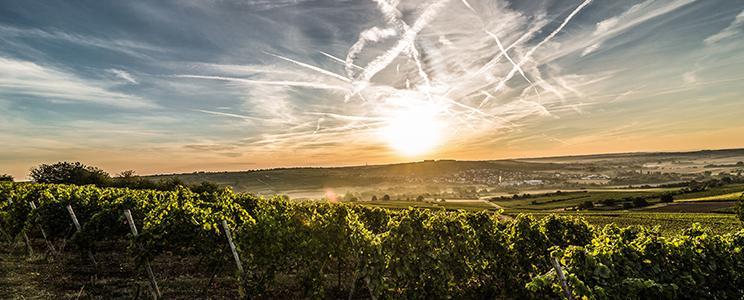 Weingut Finkenauer